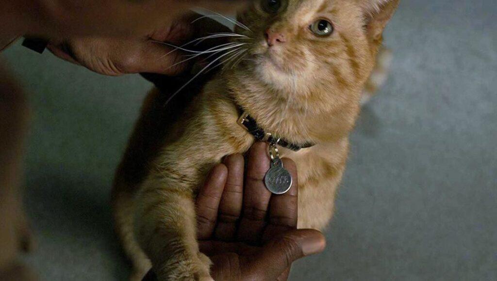 Os diretores explicam o que um filme do gato Goose, da CAPITÃ MARVEL, implicaria