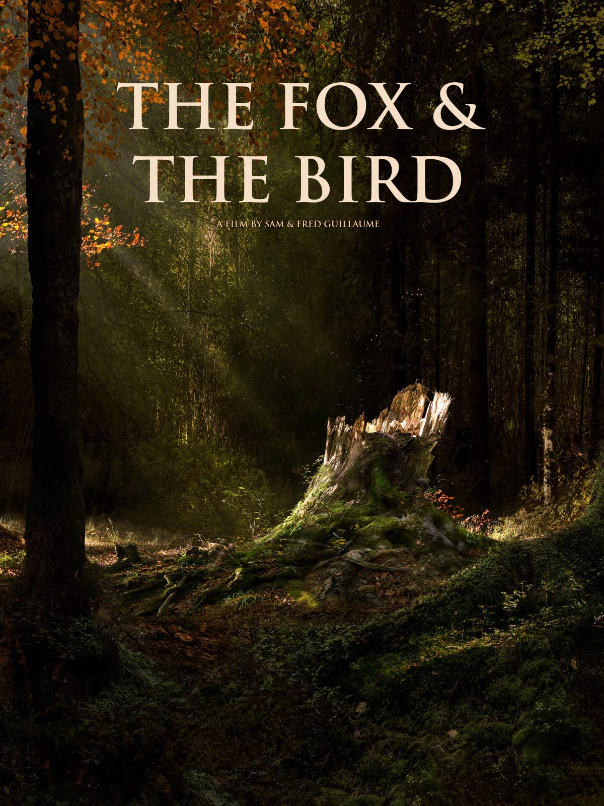 the fox and the bird curta metragem em cgi digido fred e sam guillaume - The Fox and the Bird | Curta metragem em CGI de Fred e Sam Guillaume